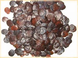 50-yopo-seeds-5
