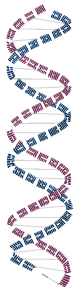 DNA_Ching2